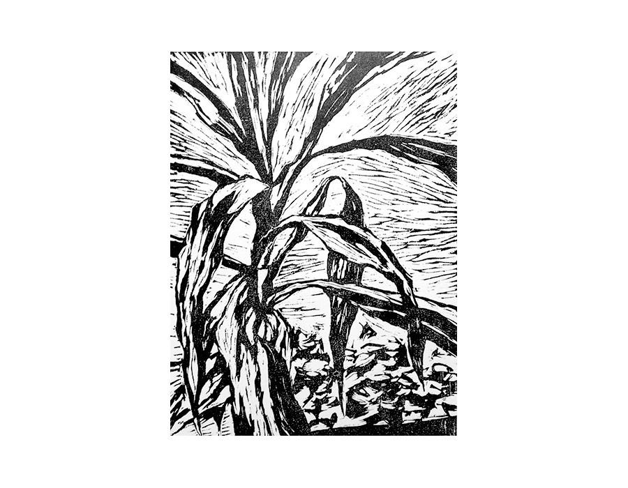 Etude de la nature morte : Yuca I