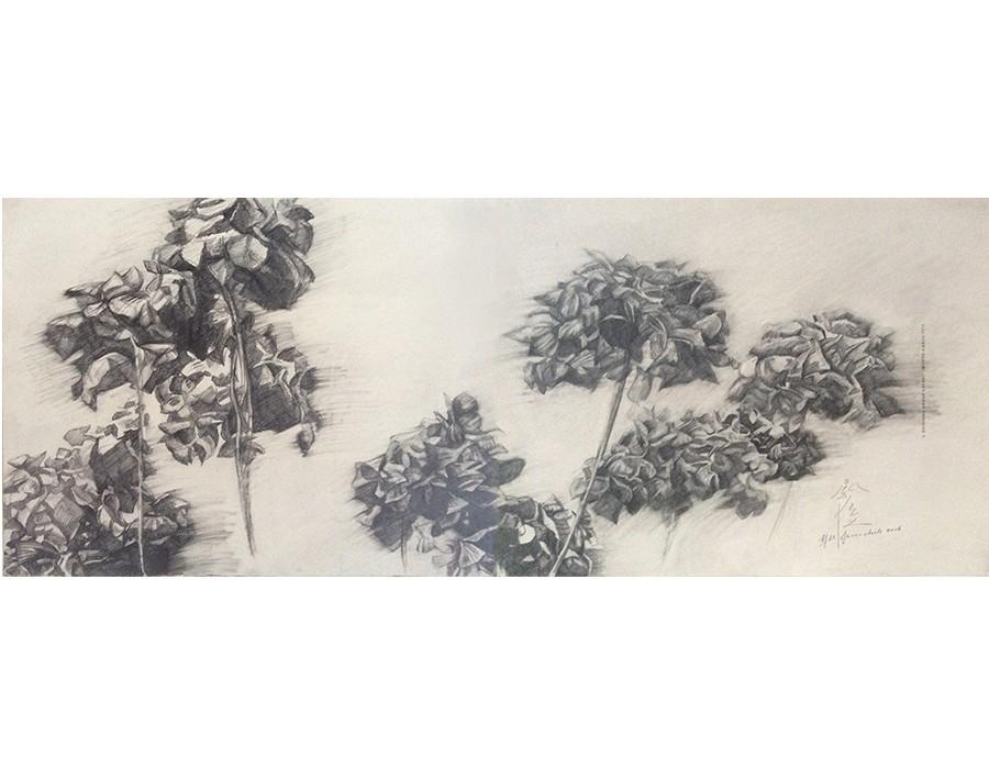 Hydrangea Macrophylla I