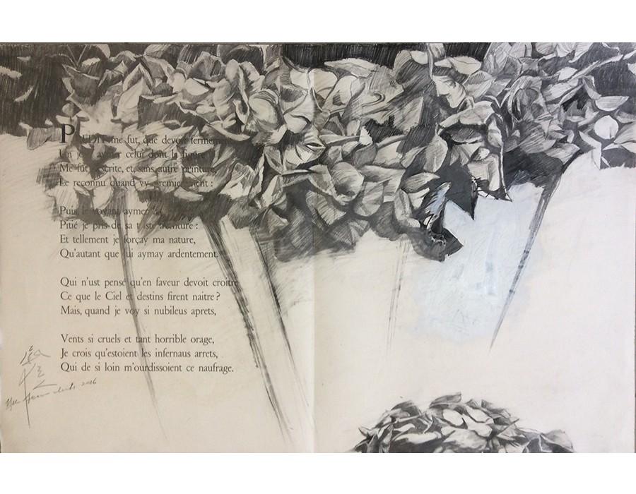 Hydrangea Macrophylla III