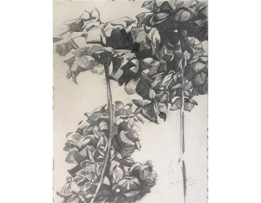 Hydrangea Macrophylla IV